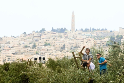 Mt. Olives Harvest - MEJDI Tours