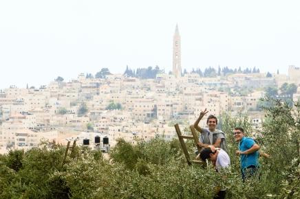 Mt. Olives Harvest - MEJDI Tours